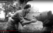 screen przedstawia zdjęcie zołnierza karmiącego niedźwiedzia