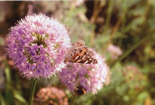 Motyl. Autorka: Anna Leraczyk