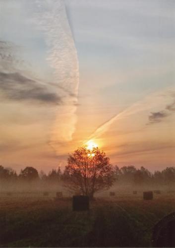 Mojemu drzewu dzis wyrosły skrzydła. Autorka: Katarzyna Mrozik-Stefańska